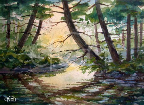 Backwater Morning